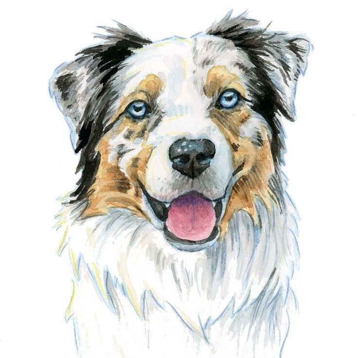 How can you not smile looking at this happy face? Todays dog breed is the Aussie/Australian Shepherd  for 4/31 of #31daysofbarktober . Prints of all breeds painted for Barktober are in the shop. #australianshepherd  #aussiesofinstagram #aussiedogs