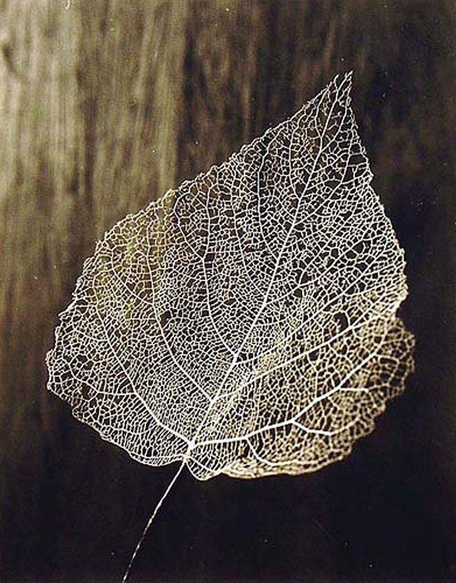 Olive Cotton Skeleton Leaf