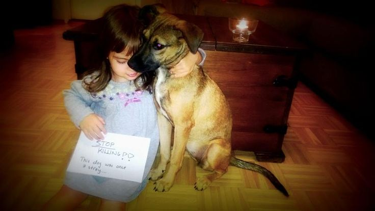 Message to Romania!  From a little sad Finnish girl and her best friend a former street dog from Romania. STOP KILLING!!!