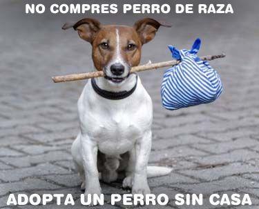 No compres perro de raza. Adopta un perro sin casa. Compartir si estas de acuerdo. https://www.facebook.com/rhasa.perro