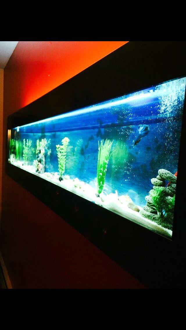 """XXL 69"""" wall aquarium sale  732-966-0629"""