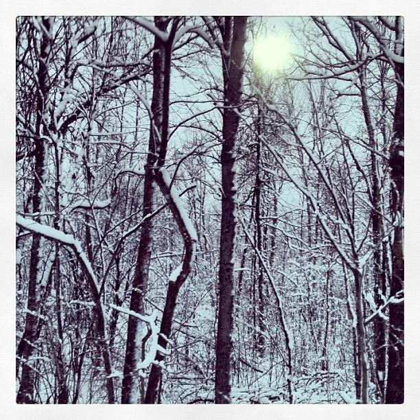 "@rdrisc92's photo: ""#winterlivin #cottagecountry"""