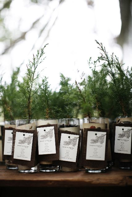 I love this!! Little trees as wedding favors - this would be PERFECT for the wedding I'd like, so natural, you can ask your guests to plant it in their yard, to match the one we'd water together during the ceremony.. ohhhhh