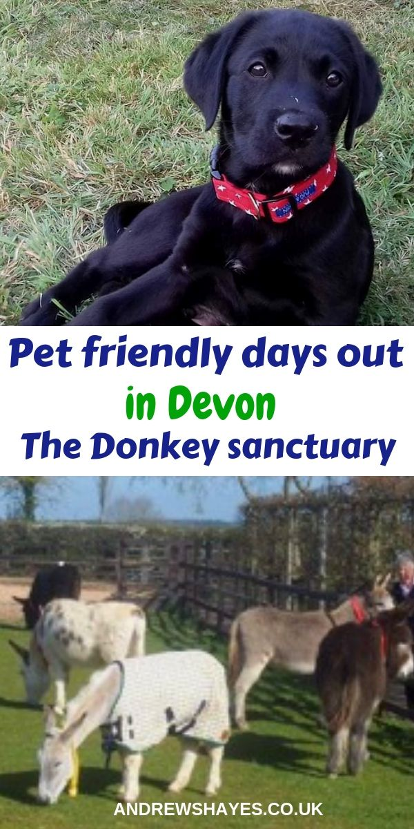 Home To Hundreds Of Rescued Donkeys That You Can Visit And Even Adopt There Are Accessible Paths Around The Main Sanctuary Excellent Coffee Sh Dogs Dog Friends Pets