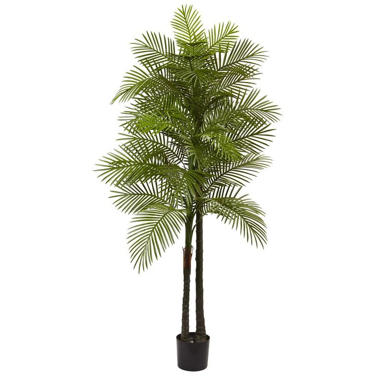 Indoor and Outdoor 7 ft. Double Robellini Palm Tree UV Resistant, Green
