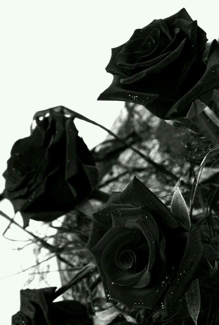 Черные и серые картинки