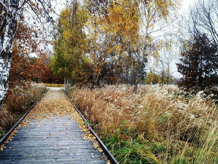 Park im. Ronalda Reagana na Przymorzu - listopad / Ronald Reagan #Park - #Przymorze - November. Author: Katarzyna Bartoszewska