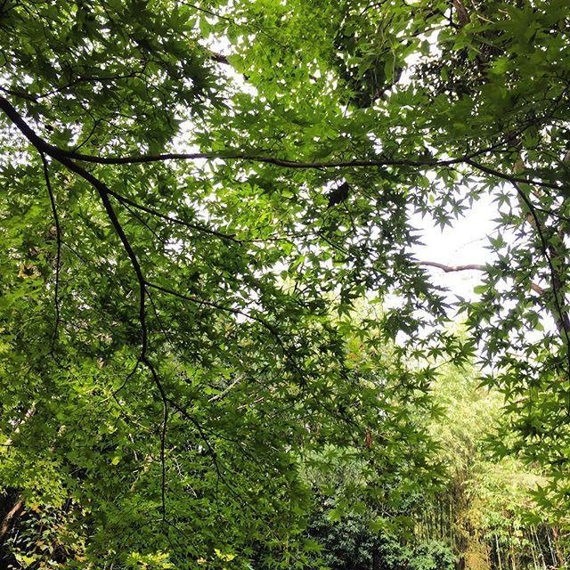 【hugshima】さんのInstagramをピンしています。 《先日のブレイク@レストラン裏庭の紅葉前 ちょっと遠いが、暖かくなったら ガーデンBBQな29会しょうかな? フードが…まあまあ…… #osaka #hillside #garden #green #forest #lunch #bbq #outdoor #italian #hammock #ガーデン #バーベキュー #森 #林 #ドッグラン #屋外 #グリーン #桜 #紅葉 #苔 #紅葉前 #もみじ #ハンモック #キャンプファイヤー》