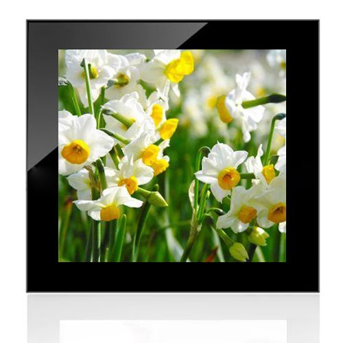 daffodil flower essay Though daffodils do grow in shades of white and orange daffodil meaning and symbolism share april 6, 2016 the daffodil is the national flower of wales.