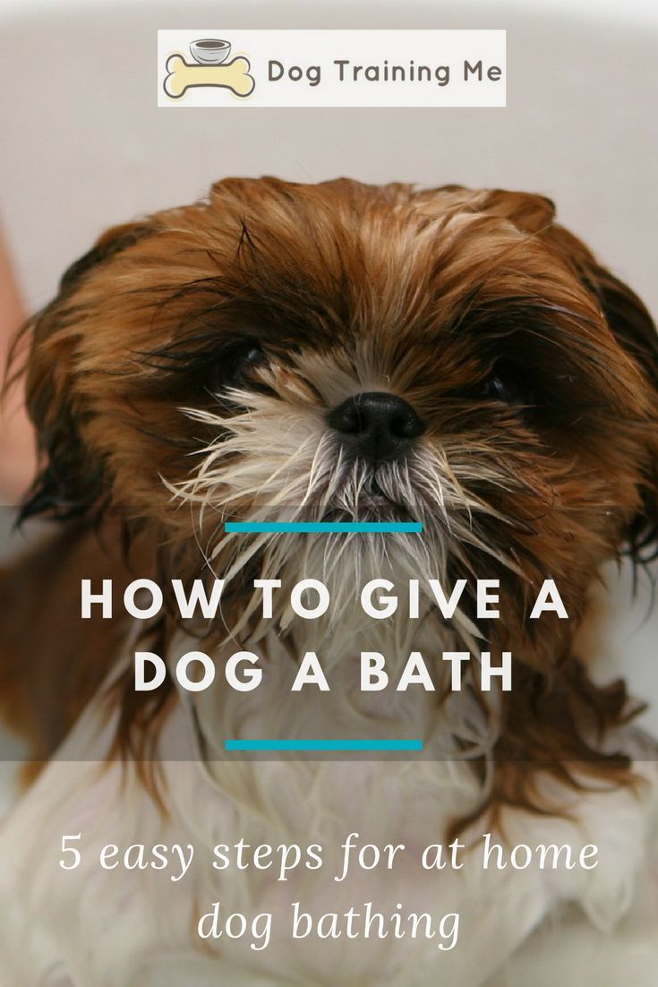 How To Give A Dog A Bath Dog Care Tips Dog Care Bathing A Puppy