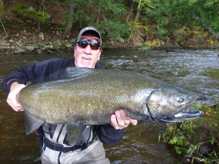198 best pulaski ny images by denita zieger on pinterest for Salmon river pulaski fishing report