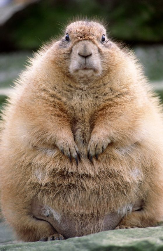Community Post 10 Cutest Groundhog Pictures Search