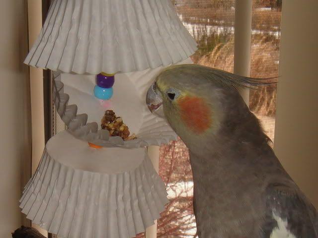 Home Made Bird Toys 101