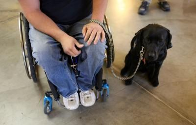 How to Register Service Dogs for Free