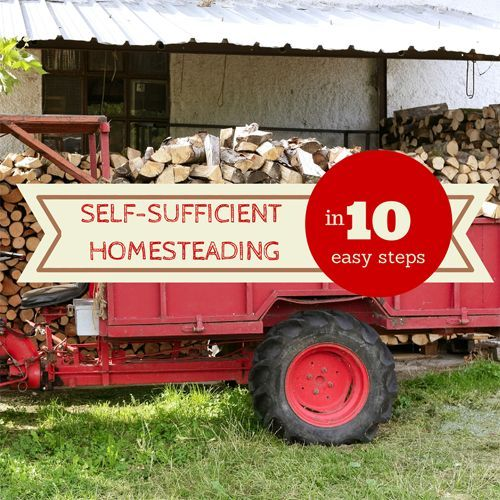 Self-Sufficient Homesteading 10 Easy Steps - If you are looking for ways you can start being more self-sufficient here are ten very basic things you can do no matter where you live! http://oursimplelife-sc.com #homesteading #livingsimple