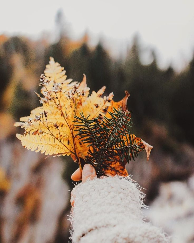 Fall has us wishing on the leaves, the trees, and endless cozy sleeves  @allegraroseb