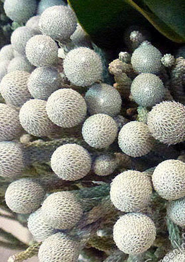 Делаем загадочный цветок брунию из полимерной флористической глины - Ярмарка Мастеров - ручная работа, handmade
