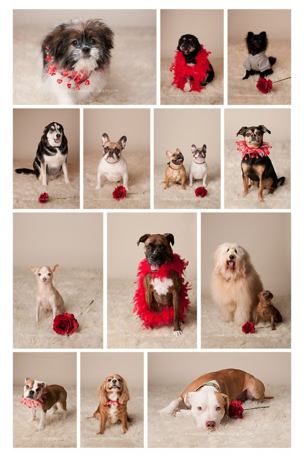I Woof You! Photos from our fundraising event at Breeze for the Surrey SPCA with photographer Ashleigh Wells!