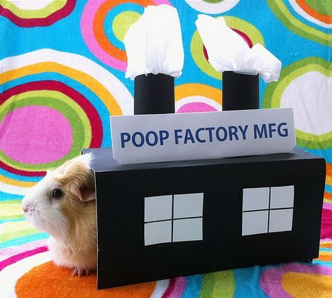 DIY Guinea Pig Factory Costume - PetDIYs.com