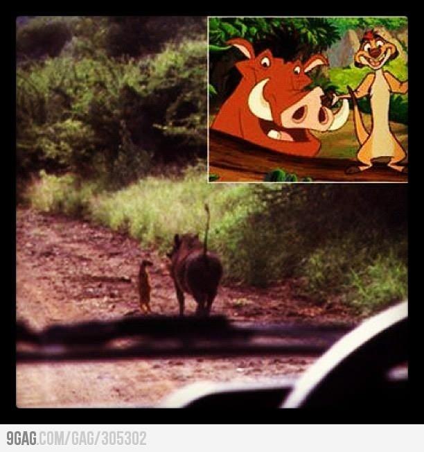 Timon y Pumba #SensaCine http://www.sensacine.com/peliculas/pelicula-10862/