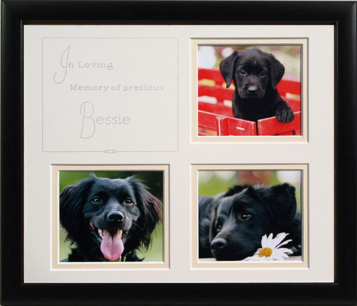 29 Best Images About Custom Framed Pets & Animals On