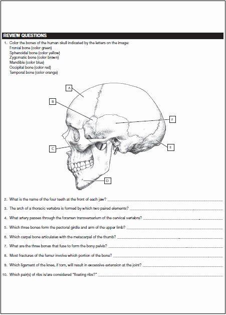 Netter 039 S Anatomy Coloring Book Lovely Netter S Anatomy Coloring Book Pdf Free Download Dir Anatomy Coloring Book Words Coloring Book Stress Coloring Book