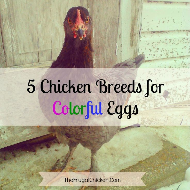 by by What happens when you cross awesome chickens with colored eggs? You get something fan-freakin-tastic that has both beauty and functionality. Breakfast just got [...]
