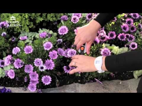 Gardening 101 Series | How to Deadhead Flowers with Tracy Wankner - YouTube