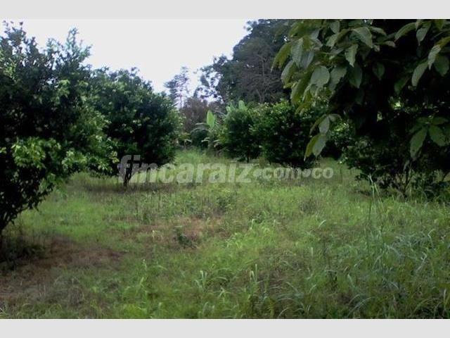 Finca en Venta - Otros municipios San Juan De Arama