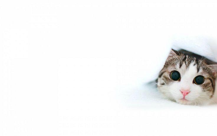 круглые глаза, кот
