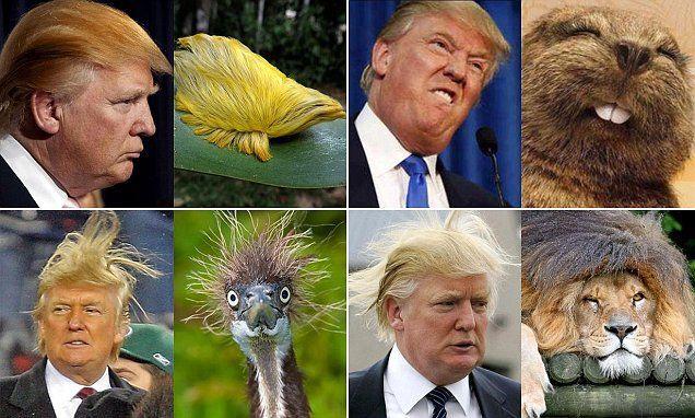 Donald Trump Look Like Funny Hilarious Memes-10 Best Memes of Donald Trump