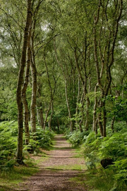 Sherwood Forest - I wanna go exploring!!