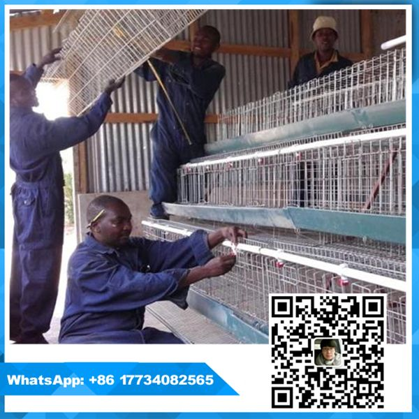 Best choice and best discounts poultry farming equipment cages for chickens