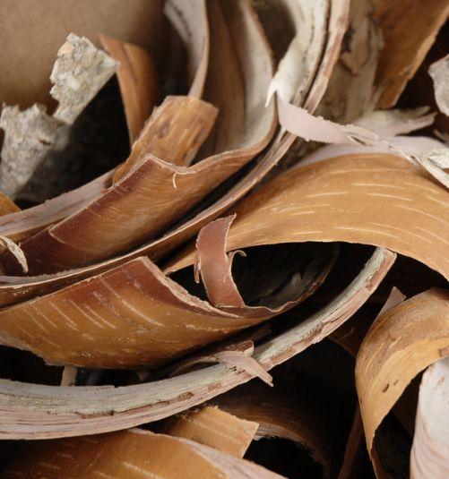 Birch bark shavings