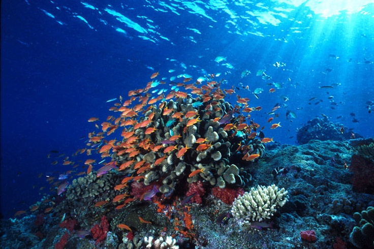 Bunaken National Marine Park, Indonesia