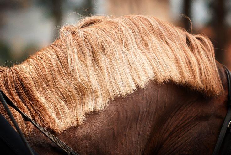 Horse Hair is one of the healthiest and high quality filling materials for a mattress | At kılı, bir yatak için en sağlıklı ve en kaliteli dolgu malzemelerinden biridir.
