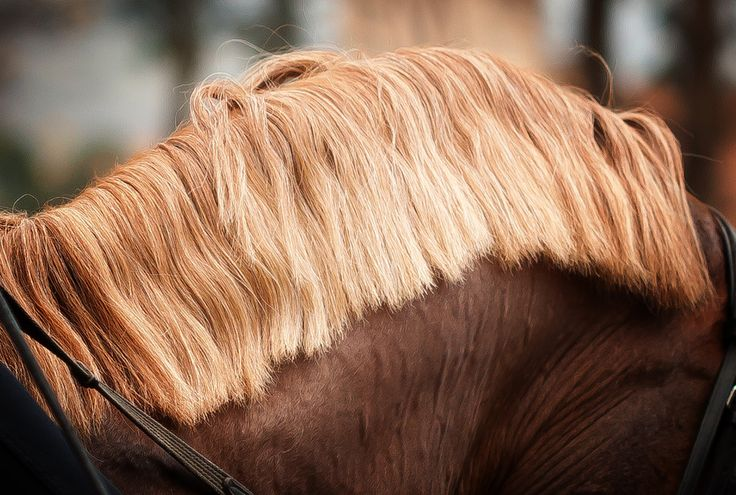 Horse Hair is one of the healthiest and high quality filling materials for a mattress | At kılı, bir yatak için en sağlıklı ve en kaliteli dolgu malzemelerinden biridir.