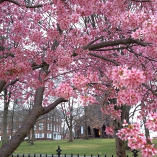 Rutgers University- spring time - almost