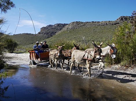 The Cederberg Heritage Trail offers slackpacking options in the Cederberg Mountain near the town of Clanwilliam, South Africa