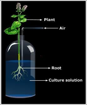 hydroponics-process