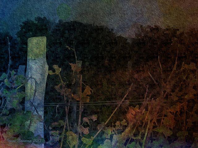 """Irene Navarra / Visioni: Poesia / """"La terra, la visione"""", """"Fili stressati e..."""