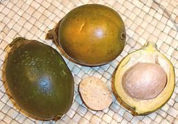 The areca nut is not a true nut, but rather a fruit categorized as a berry. It is commercially available in dried, cured and fresh forms. When the husk of the fresh fruit is green, the nut inside is soft enough to be cut with a typical knife. In the ripe fruit, the husk becomes yellow or orange and, as it dries, the fruit inside hardens to a wood-like consistency. At that stage, the areca nut can only be sliced using a special scissors-like cutter.  Usually for chewing, a few slices of the…