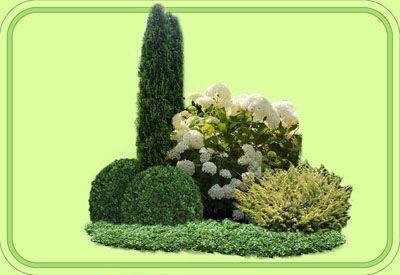 1. Thuja occidentalis 'Boothii' 2. Buxus sempervirens 3. Hydrangea arborescens 'Annabelle' 4. Taxus baccata 'Washingtonii' 5. Cotoneaster dammeri