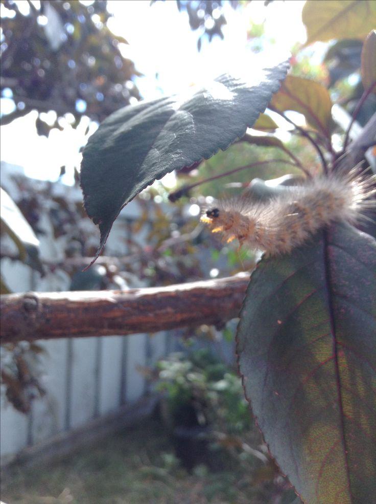 The fierce caterpillar