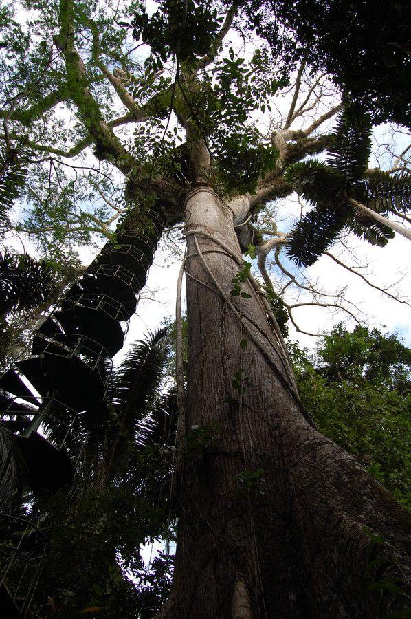 Canopy Tower, Panama Rainforest Discovery Center, Parque Nacional de Soberania, Gamboa, Panama by Sheri Fresonke Harper on 500px