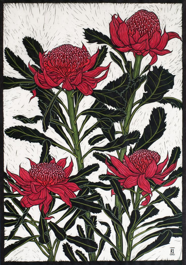 """""""Waratah"""" linocut, by Australian artist Rachel Newling. Click through to her site for more of her work, or to buy prints."""