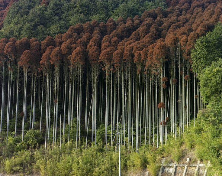 Japanese photographer TOSHIO SHIBATA