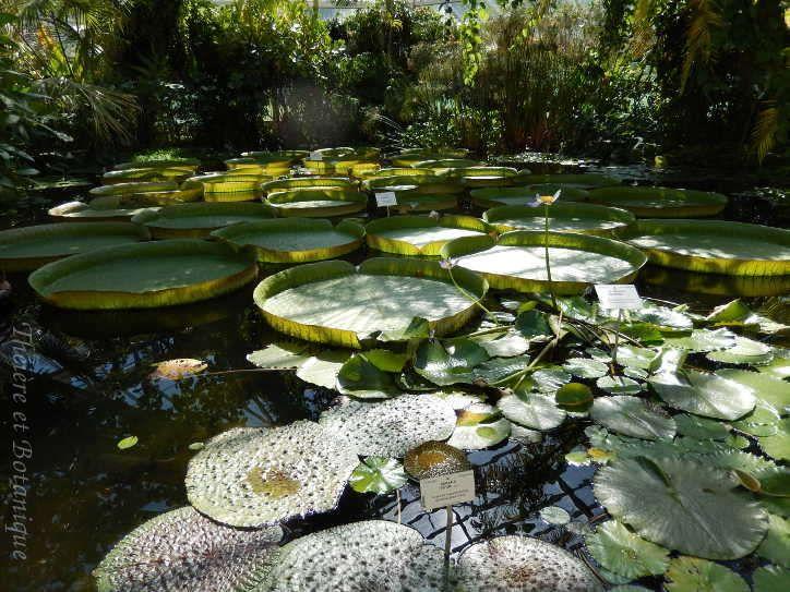 Les 25 meilleures id es de la cat gorie jardin botanique for Au jardin botanic gardens