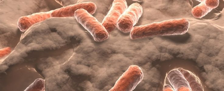 Natural Protein Can Reverse Fibrosing Strictures in Inflammatory Bowel Disease IBD News Today