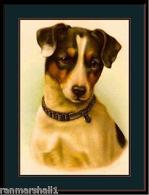 English-Print-Jack-Russell-Terrier-Puppy-Dog-Head-Art-Vintage-Poster-Picture